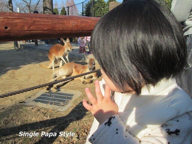 カンガルーを見る娘