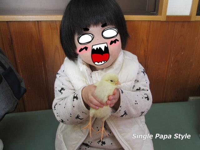 ヒヨコを抱く娘の写真